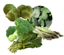 DIET - Protein: Greens Rich In Protein