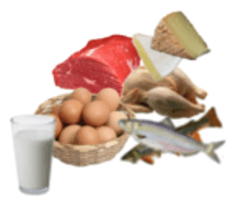 Diet - Protein: High Protein Animal Foods