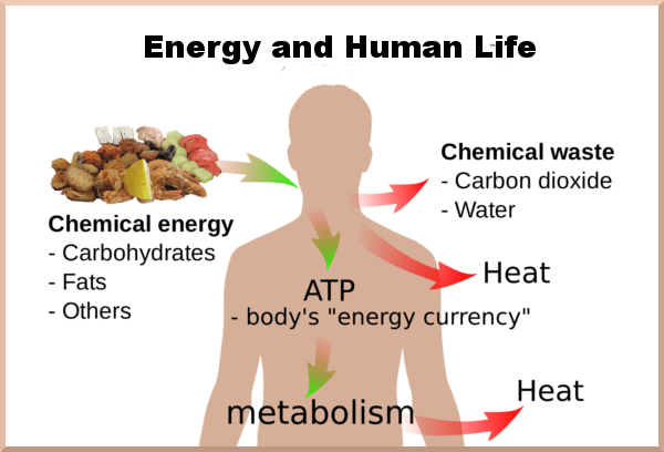 Carbohydrates: Energy for Life